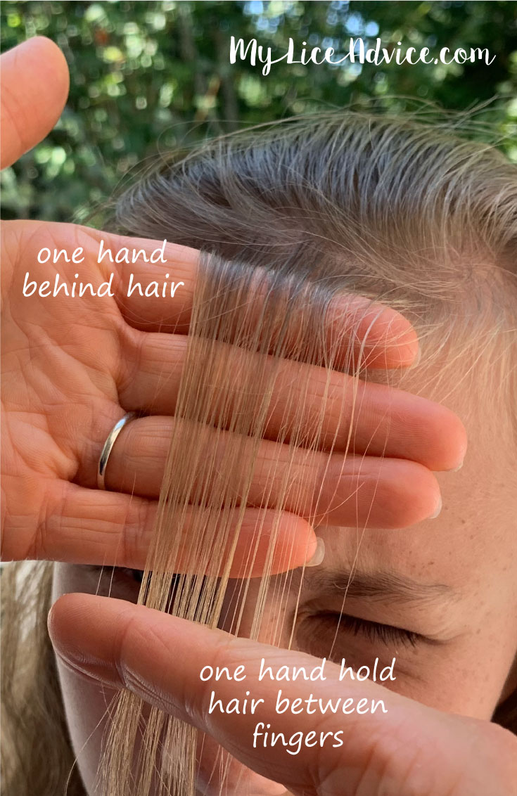 Hand placement is outlined for how to check for lice. A blond girl's bangs are check for lice