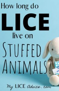 "A white stuffed rabbit is holding a blue with white polka dot present. The background is a baby blue color with the words ""How Long do Lice Live on Stuffed Animals?"""