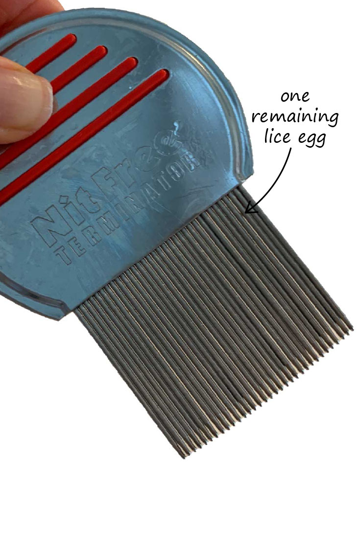 lice-comb-cleaned