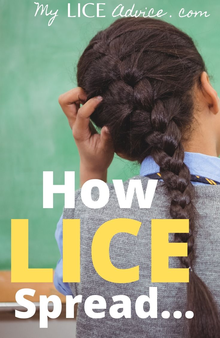 With 12 million cases of head lice in the United States every year, it is an understatement to say that lice are contagious…