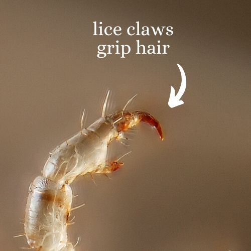 Lice Claws
