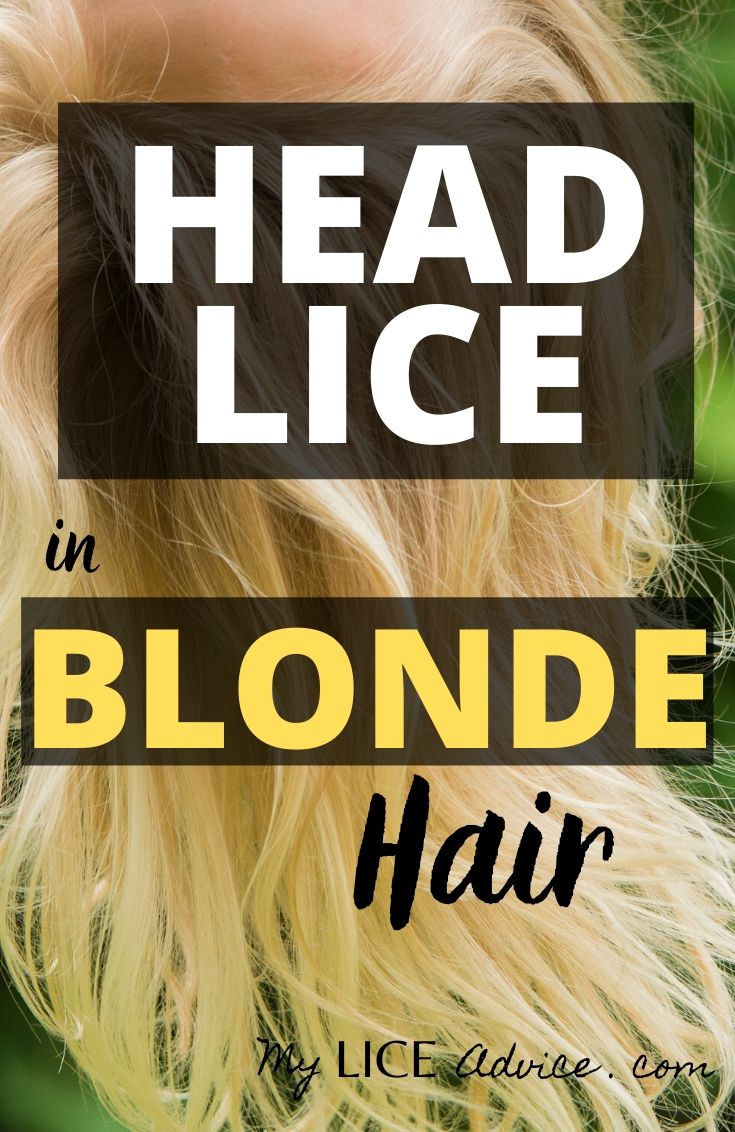 Dealing with head lice can be difficult for anyone, but it can be especially difficult for those with blonde hair. Whether you are checking for lice on your blonde child or trying to get rid of lice, we've got you covered on this Blonde-specific lice tutorial.