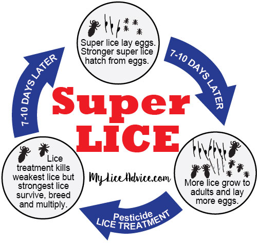 Super lice is a mutant strain of head lice spreading throughout the world, particularly in the US and Canada. Discover what they are and how to kill them…