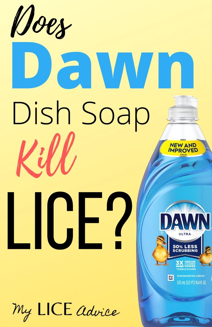 Discover the truth about Dawn dish soap as a lice treatment and whether Dawn can kill lice and nits.