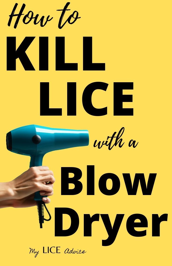 Discover how blow drying effects lice and lice eggs and how blow drying can help you get rid of head lice.
