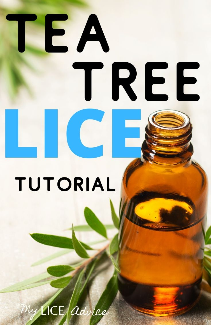 Tea Tree Oil For Lice: How to Kill and Prevent Lice Using Tea Tree Oil