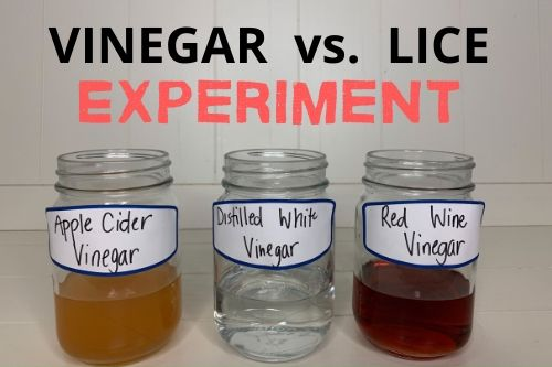vinegar vs lice experiment