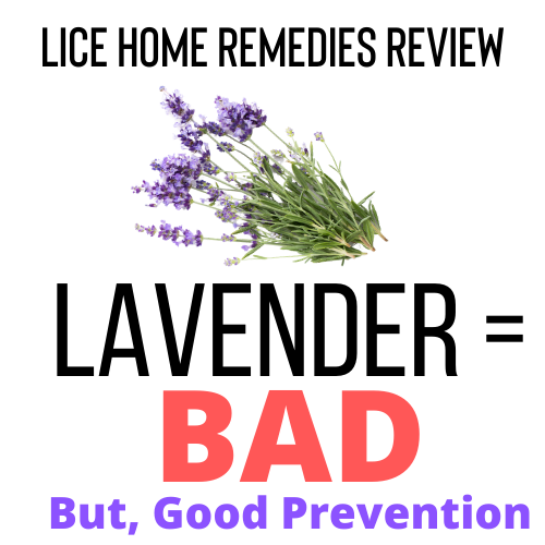 Lavender is a bad home remedy for lice, but it is good for lice prevention