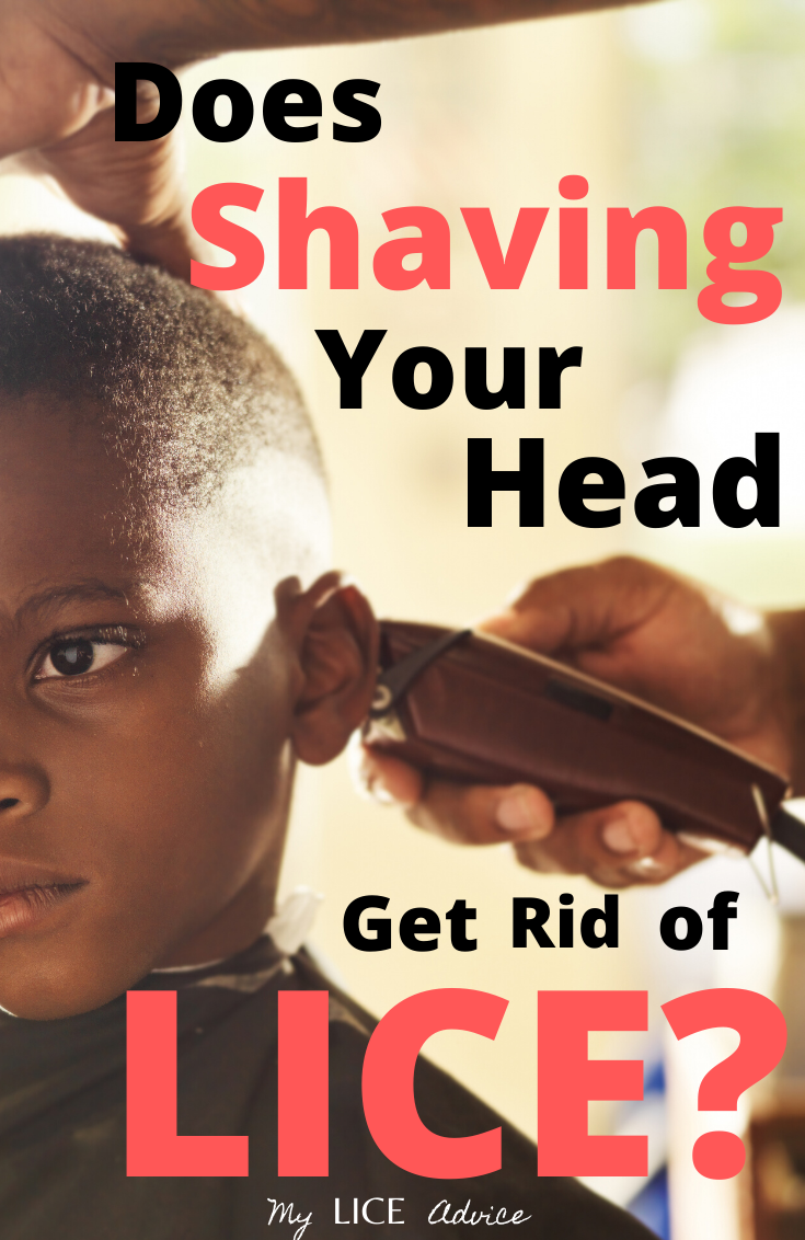 Discover if shaving or cutting your hair can effectively get rid of head lice and how much hair lice need to survive.